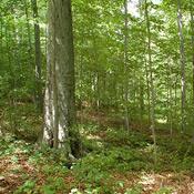 palmyra-kirtland-woods